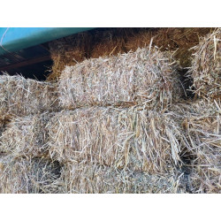 Oat Hay - New Season